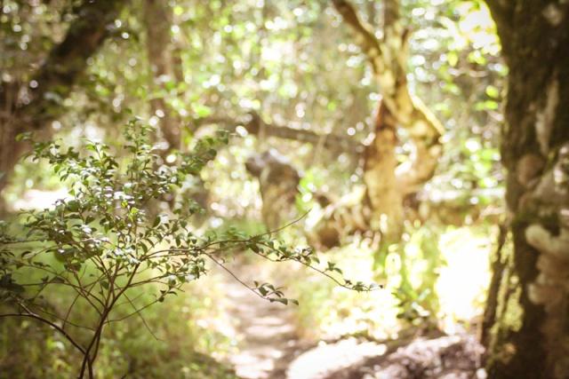 Platbos Forest-2-2