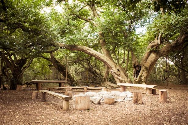 Platbos Forest-2