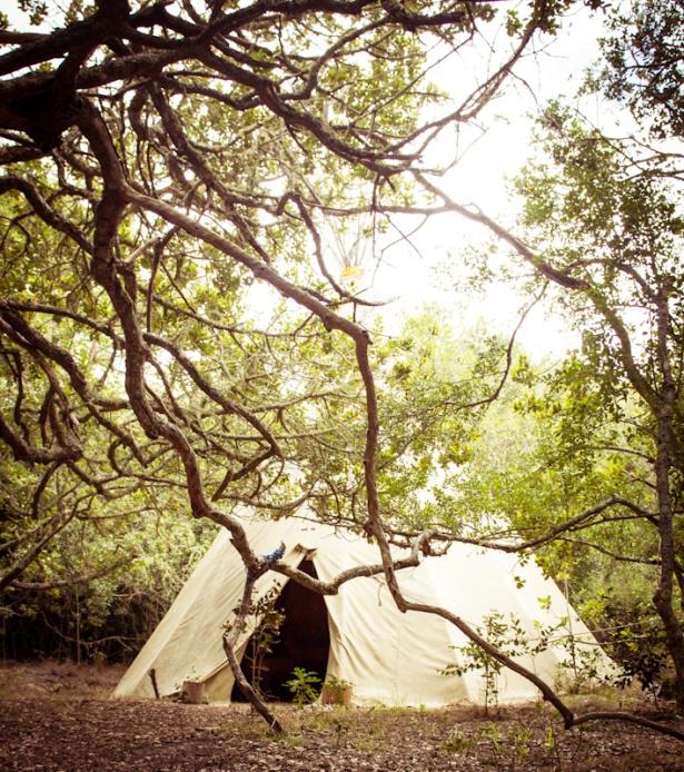 Platbos Forest-3
