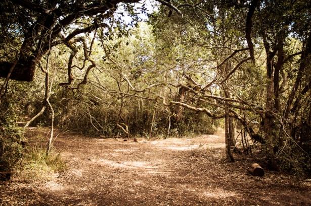 Platbos Forest-6