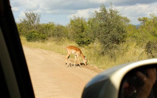 Impala on the S114